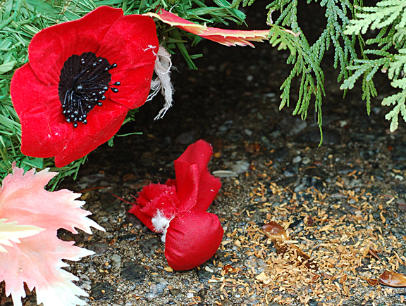 Offering of tobacco wrapped in red cloth beside poppy on Remembrance Day wreath